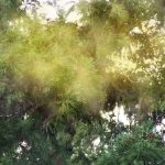 花粉症の時期で春に多いものは?夏や秋の特徴も知って気を付けよう