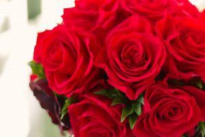 母の日の薔薇