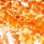 法多山の紅葉まつりを楽しむなら、もみじ祭りのイベントや紅葉の見頃も合わせてチェック!