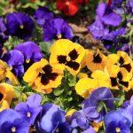 2月2日の誕生花12種類【画像付き】を花言葉と別名【読み方付き】で紹介!